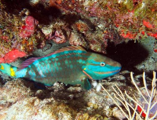 Anguilla Snorkel – Photo Credit: Mike Vogel