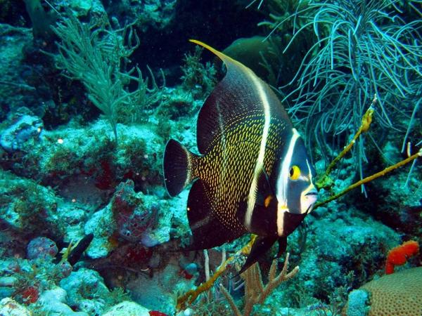 Snorkel Buddy Anguilla